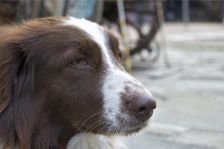 Actuació de l'Ajuntament quan es localitza un gos abandonat en la via pública